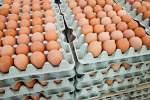 Produção de ovos de galinha no RN bate recorde e é a maior de toda a série histórica