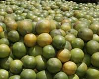 RN restringe entrada de frutas para evitar praga
