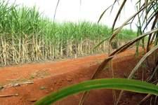 Em resposta à Unica, ministro diz que promoverá etanol brasileiro na COP-26