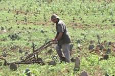 RN abre linha de crédito de R$ 9 milhões para pequenos agricultores